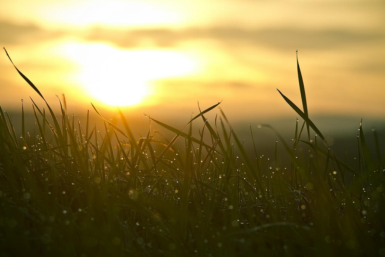 grass-546794_1280
